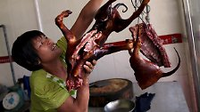 Gequält, geschlagen, gegessen: Hundeliebe in China hat zwei Seiten